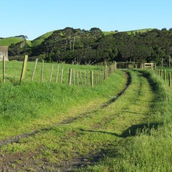 early orning farm walk grasses pc 035_4000x3000