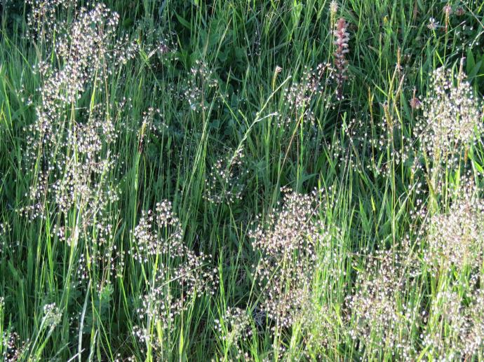 early orning farm walk grasses pc 037_4000x3000