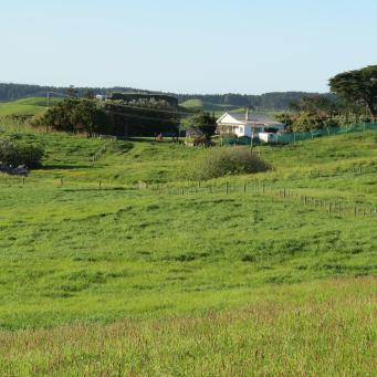 early orning farm walk grasses pc 038_4000x3000