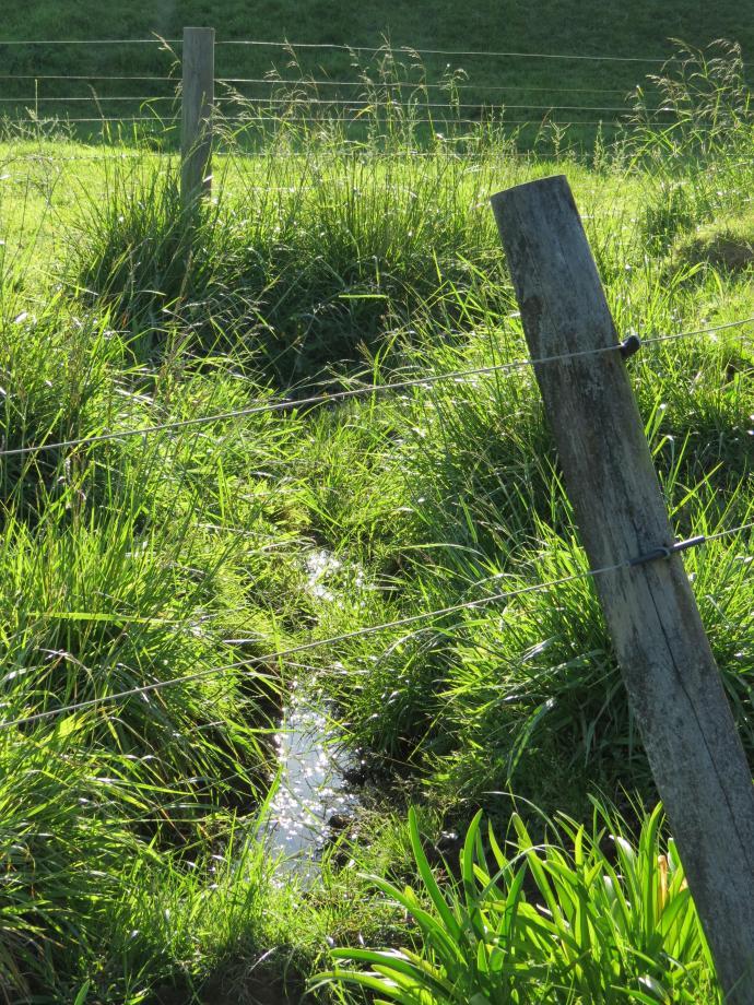 early orning farm walk grasses pc 043_3000x4000