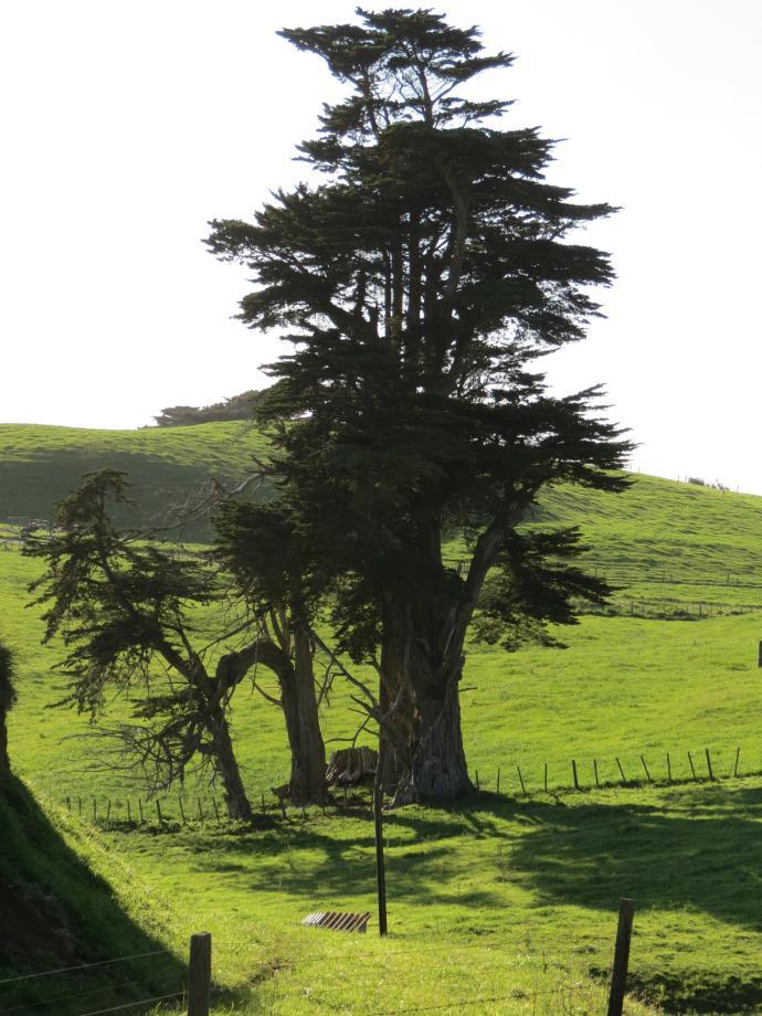 early orning farm walk grasses pc 044_3000x4000
