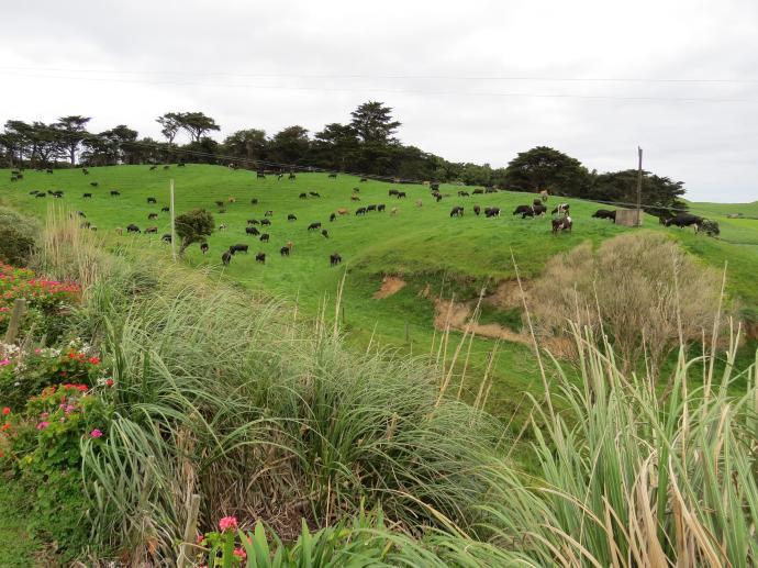 Lauries farm jc 005_4000x3000