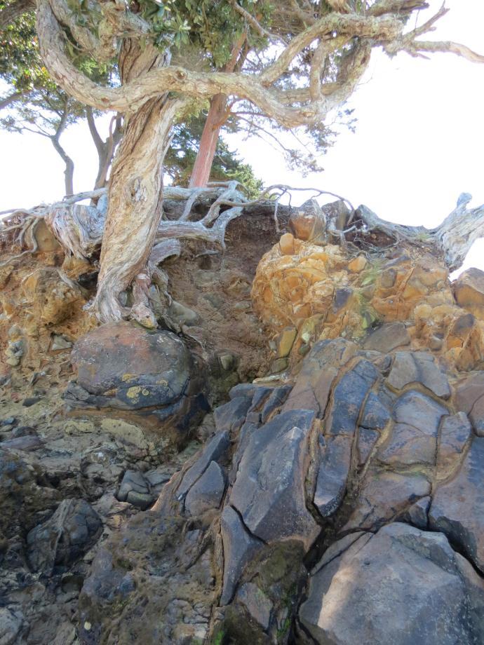 Wiauia Pa Clarkes Beach pc 044_3000x4000