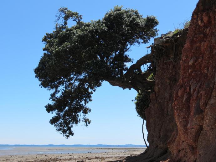 Wiauia Pa Clarkes Beach pc 045_4000x3000