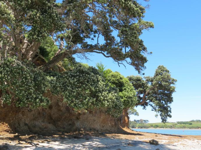 Wiauia Pa Clarkes Beach pc 049_4000x3000
