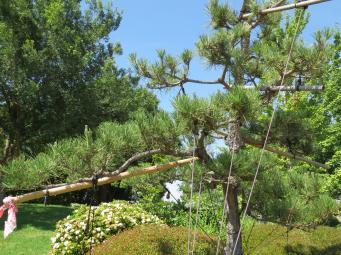 Dubbo botanic gardens pc 014_4000x3000
