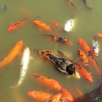 Dubbo botanic gardens pc 023_4000x3000