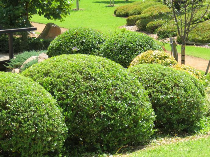 Dubbo botanic gardens pc 057_4000x3000