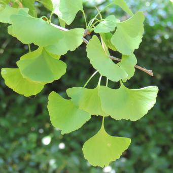 Dubbo botanic gardens pc 088_4000x3000