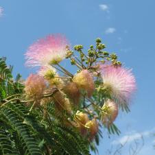 Dubbo botanic gardens pc 164_4000x3000