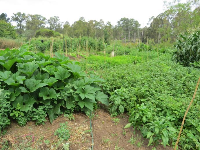 garden pc 011_4000x3000