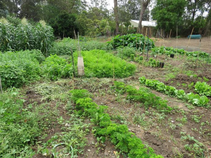 garden pc 024_4000x3000