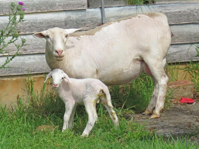 lamb jc 009_4000x3000