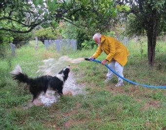 back flush pumps and dog wash 016