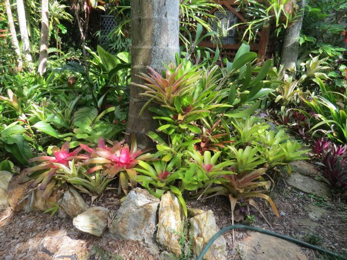 Bromeliads bat plant pc 019_4000x3000