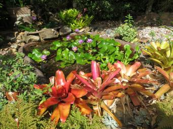 Bromeliads bat plant pc 036_4000x3000