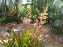 garden jan 2013 005_3264x2448