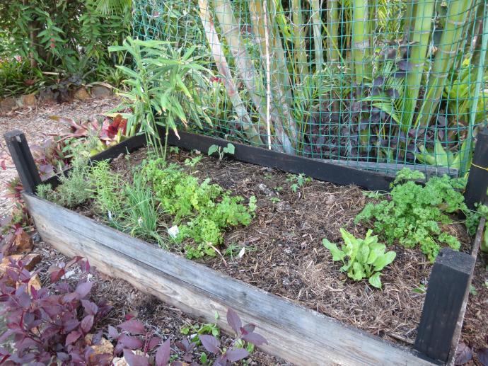 garden Jan 2016 pc 006_4000x3000