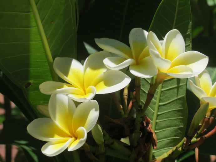 jan garden 015_4000x3000