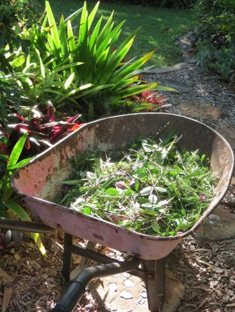 garden in february 2016 pc 034_3000x4000