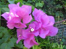 garden in february 2016 pc 103_4000x3000