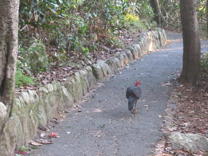 sunrise burleigh heads walk pc 071_4000x3000