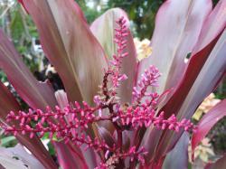 july garden-13_4000x3000