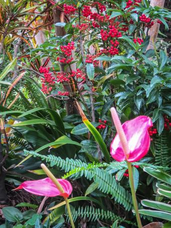 july garden-16_3000x4000