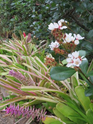 july garden-19_3000x4000