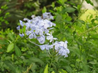 july garden-20_4000x3000