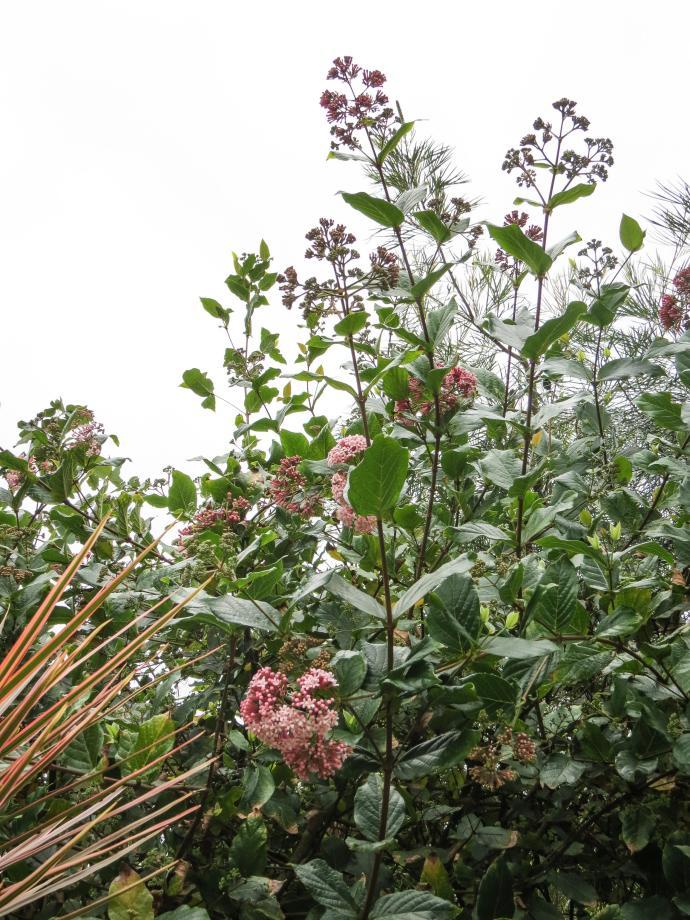 july garden-24_3000x4000