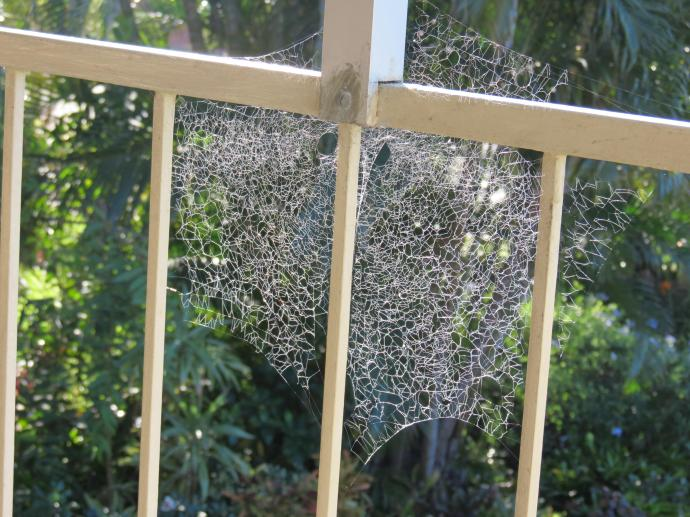 spiders web 006_4000x3000